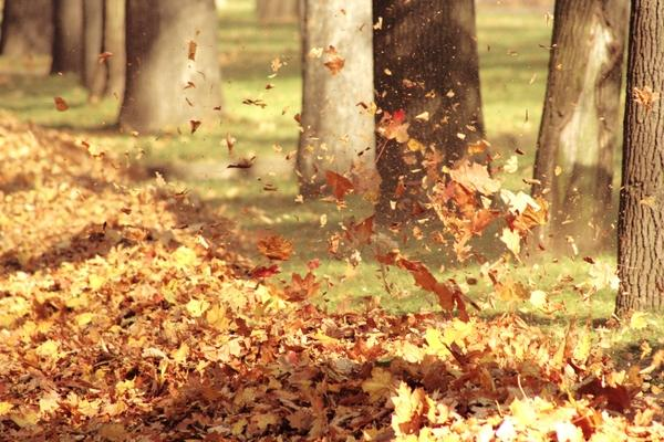 103253_trees-leaves-winds-fallen-leaves-3456x2304-wallpaper_www-wallpapermi-com_28